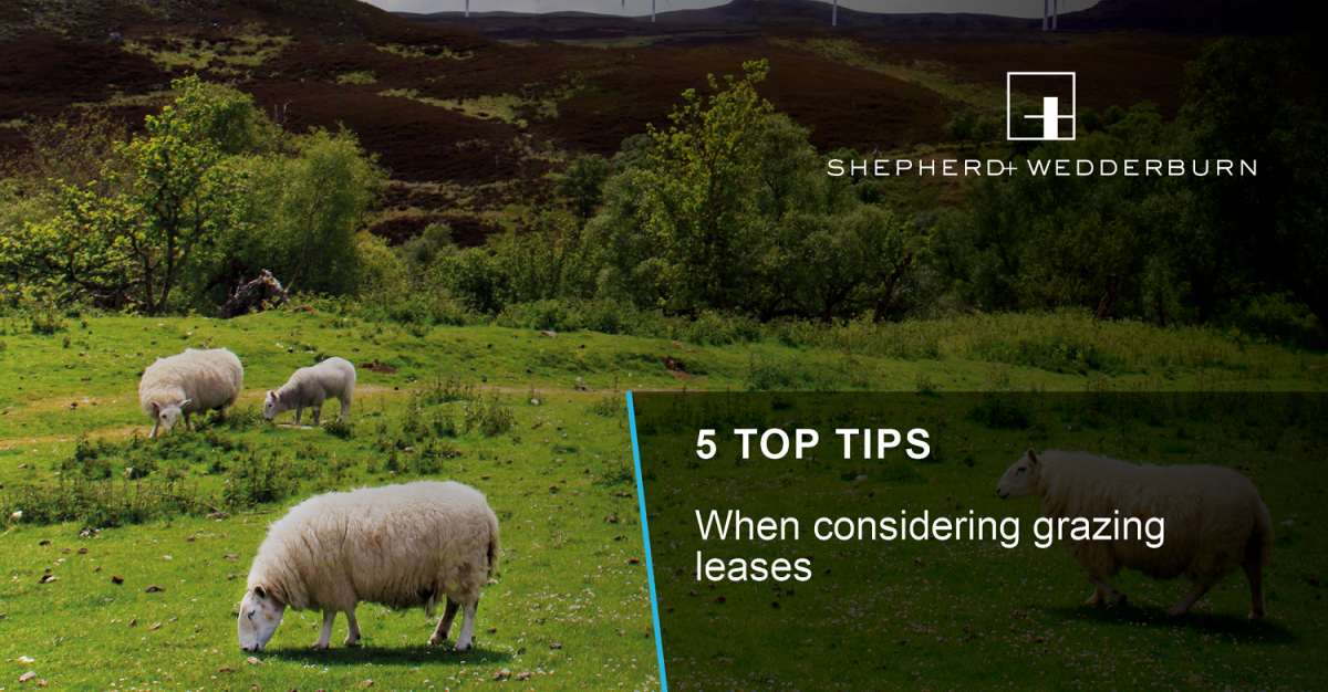 5 Top Tips When Considering Grazing Leases Shepherd And